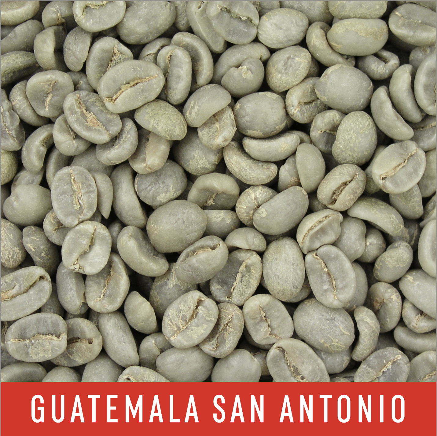 Green Coffee Beans: Guatemala San Antonio - 1 LB